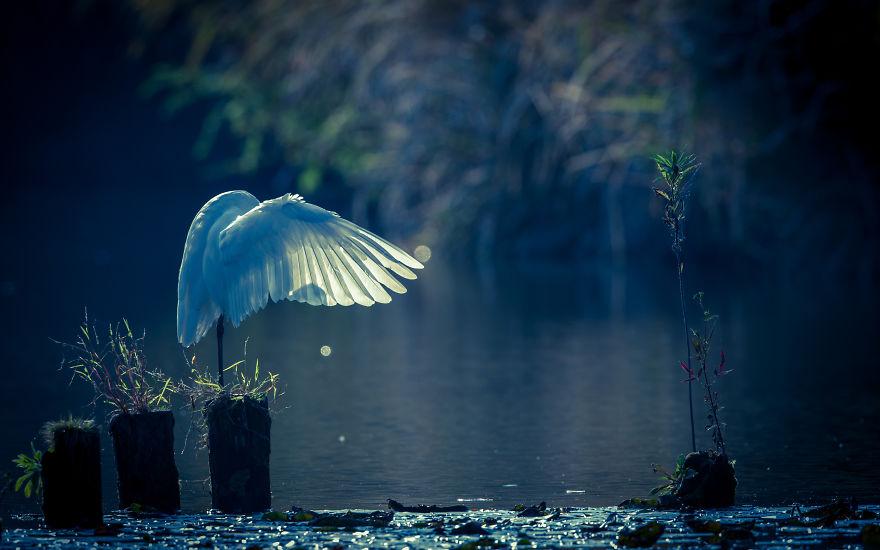 εικόνες από ένα μεγάλο πουλί
