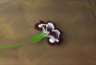 Απίθανα έργα τέχνης στο νερό εμπνευσμένα από τη φύση σε ένα μαγικό βίντεο! - Κυρίως Φωτογραφία - Gallery - Video