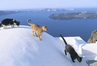 Αγαπάς τις γάτες; -  Αυτή είναι η δουλειά των ονείρων σου - Η αγγελία που έγινε viral - Κυρίως Φωτογραφία - Gallery - Video