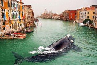 Τι δουλειά έχει μια φάλαινα να κάνει βουτιές στο κεντρικό κανάλι μιας πόλης κι όχι μόνο; (Φωτό) - Κυρίως Φωτογραφία - Gallery - Video