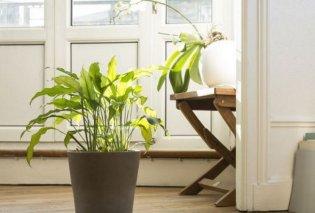 12 μοναδικά φυτά εσωτερικού χώρου που μπορούν να «επιβιώσουν» ακόμα και στο απόλυτο σκοτάδι (Φωτό) - Κυρίως Φωτογραφία - Gallery - Video