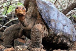 H γιγάντια χελώνα «Τζορτζ»: Ο Γιώργος έζησε ως τα 100! Ποιο ήταν το μυστικό της μακροζωίας του    - Κυρίως Φωτογραφία - Gallery - Video