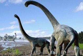 Σπουδαία ανακάλυψη: Βρέθηκε στην Τανζανία το απολίθωμα ακόμη ενός Τιτανόσαυρου - Κυρίως Φωτογραφία - Gallery - Video