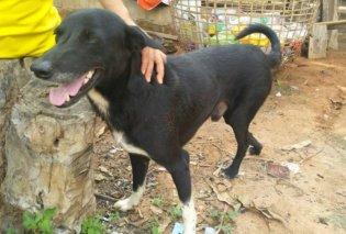 Story of the day: Ανάπηρος σκύλος έσωσε νεογέννητο - Η 15χρονη μητέρα του το έθαψε ζωντανό - Κυρίως Φωτογραφία - Gallery - Video
