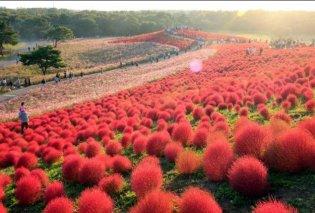 Καλησπέρα σας από ένα πάρκο-κήπο των θαυμάτων & των χρωμάτων στην Ιαπωνία! (φωτό) - Κυρίως Φωτογραφία - Gallery - Video