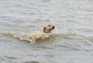 Good news η στιγμή της διάσωσης ενός σκύλου από τα μανιασμένα κύματα στην Κρήτη (φωτό & βίντεο) - Κυρίως Φωτογραφία - Gallery - Video