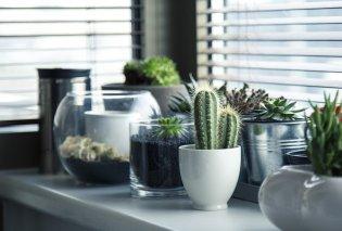 Φυτά εσωτερικού χώρου: Πως να διακοσμήσεις το σπίτι σου με αυτά (φωτό) - Κυρίως Φωτογραφία - Gallery - Video