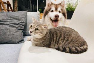 Κτηνιατρικός σύλλογος: Μην χρησιμοποιείται απολυμαντικά & gel με οινόπνευμα για σκύλους και γάτες – Επικίνδυνο για τα κατοικίδια σας - Κυρίως Φωτογραφία - Gallery - Video