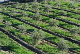 Τα ελληνικά λάδια κατέκτησαν τα πρώτα βραβεία στην παγκόσμια έκθεση Berlin Global Olive Oil Awards 2020 – Πλατινένια & χρυσά για τους ελαιώνες Σακελλαρόπουλου & E-LA-WON (Φωτό) - Κυρίως Φωτογραφία - Gallery - Video