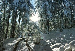 Και ξαφνικά χειμώνιασε σε Ελβετία, Αυστρία, Γερμανία - Δείτε φωτό & βίντεο με 50 εκατοστά χιόνι  - Κυρίως Φωτογραφία - Gallery - Video
