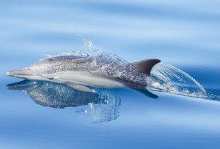 Συναρπαστικές, μαγικές, ονειρεμένες - Οι 30 φιναλίστ του Ocean Photography Awards (φωτό)  - Κυρίως Φωτογραφία - Gallery - Video