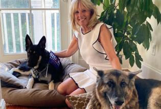 Η πρώτη φωτογραφία της Jill Βiden με τα σκυλιά τους στον Λευκό οίκο - To πρώτο Zoom  meeting με όλα τα αδέσποτα των ΗΠΑ - Κυρίως Φωτογραφία - Gallery - Video