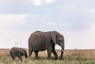 Βίντεο η στιγμή που μαμά ελεφαντίνα αποτελειώνει κροκόδειλο μέσα σε ποτάμι - απειλούσε το μικρό της και ανέλαβε δράση - Κυρίως Φωτογραφία - Gallery - Video