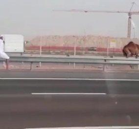 To βίντεο της ημέρας: Κυνηγώντας... καμήλα στην εθνική οδό! - Κυρίως Φωτογραφία - Gallery - Video