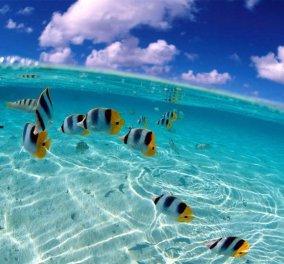 Μπαχάμες: Oι πιο μαγευτικές φωτογραφίες από τα εκπάγλου καλλονής νησιά που θα σας συναρπάσουν! (slideshow) - Κυρίως Φωτογραφία - Gallery - Video