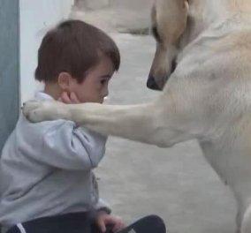 4,5 εκ. κλικς κέρδισε αυτό βίντεο της υπέροχης αγάπης που δείχνει ένας σκύλος στον μικρούλη με σύνδρομο down!  - Κυρίως Φωτογραφία - Gallery - Video