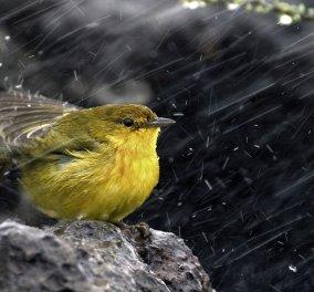 Βροχές & καταιγίδες σε όλη τη χώρα - Χιόνια στην Δ. Μακεδονία - Στους 14 βαθμούς ο υδράργυρος στην συννεφιασμένη Αττική! (βίντεο) - Κυρίως Φωτογραφία - Gallery - Video