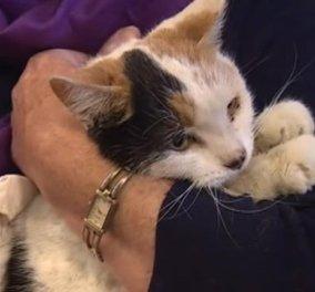 Απίστευτο: Γάτα επιβιώνει μετά από έξι εβδομάδες εγκλωβισμένη σε καμινάδα! (βίντεο) - Κυρίως Φωτογραφία - Gallery - Video