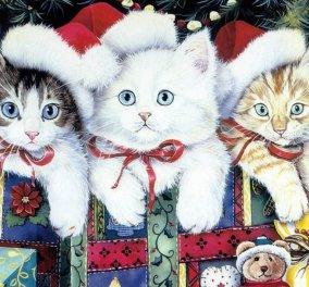 Smile: 6 γάτες ντύθηκαν κατάλληλα για τη γιορτή των Χριστουγέννων και είναι κατενθουσιασμένες! (βίντεο) - Κυρίως Φωτογραφία - Gallery - Video