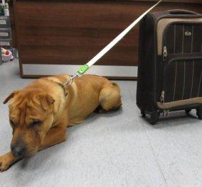 Ακόμη και ισόβια απαγόρευση στη Σκωτία για όποιον κακομεταχειριστεί έναν σκύλο: Η ιστορία του μικρού Κάι που βρέθηκε εγκαταλελειμμένος με όλα τα υπάρχοντά του!  - Κυρίως Φωτογραφία - Gallery - Video