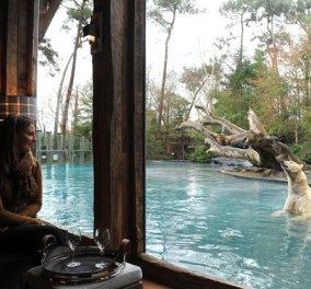 «Jamala Wildlife Lodge»: Το ξενοδοχείο που προσφέρει διαμονή δίπλα σε άγρια ζώα! - Κυρίως Φωτογραφία - Gallery - Video