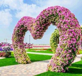 Miracle Garden: O κήπος - θάυμα του Ντουμπάι με μωβ λουλούδια σαν αμάξια, παγόνια & καρδούλες - Κυρίως Φωτογραφία - Gallery - Video