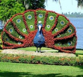 Εκπληκτικές εικόνες γλυπτικής στον κήπο - Λουλουδι, ζώα ή κινούμενα σχέδια - Κυρίως Φωτογραφία - Gallery - Video