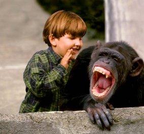 Οι χιμπατζήδες γελούν αλλά και χαμογελούν σαν τους ανθρώπους: Α ρε τι προγόνους έχουμε - Κυρίως Φωτογραφία - Gallery - Video