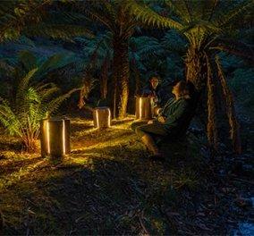 Ο τυφλός που ''δημιουργεί'' φως - Κορμοί δέντρων που έγιναν λάμπες  - Κυρίως Φωτογραφία - Gallery - Video