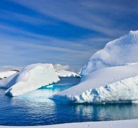 Ανακαλύφθηκε το αρχαιότερο σπέρμα στον κόσμο , 50 εκατομ.  ετών στην Ανταρκτική  - Κυρίως Φωτογραφία - Gallery - Video