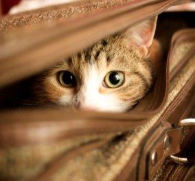 Cat Story: Μαρς, o γάτος που ταξίδεψε για μίλια μέσα σε κινητήρα φορτηγού - Κυρίως Φωτογραφία - Gallery - Video