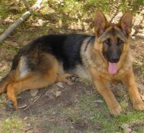 Φοβερό! Δείτε στο βίντεο την διάσωση ενός σκύλου  - Κυρίως Φωτογραφία - Gallery - Video
