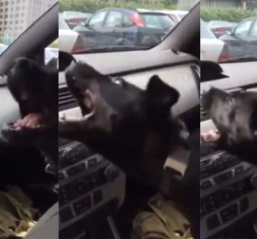 Βίντεο: Ξετρελάθηκε ο σκυλάκος όταν δροσίστηκε για πρώτη φορά από το aircondition  - Κυρίως Φωτογραφία - Gallery - Video