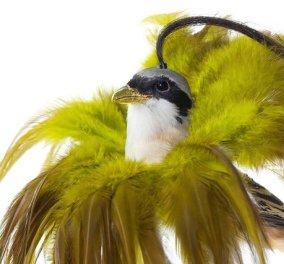 Η δημιουργικότητα ξεπερνάει κάθε φαντασία! Εκκεντρικά πουλιά με χτενίσματα για βραβείο!  - Κυρίως Φωτογραφία - Gallery - Video