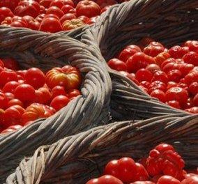 Made in Greece τα τρόφιμα «θησαυροί» της ελληνικής γης- Ντοματάκι και Φάβα Σαντορίνης- Μέλι Ελάτης - Κυρίως Φωτογραφία - Gallery - Video