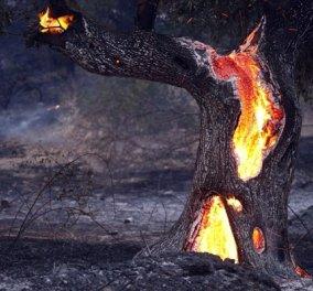 Πολιτική Προστασία: Σε ποιες περιοχές υπάρχει κίνδυνος πυρκαγιάς το Σάββατο  - Κυρίως Φωτογραφία - Gallery - Video