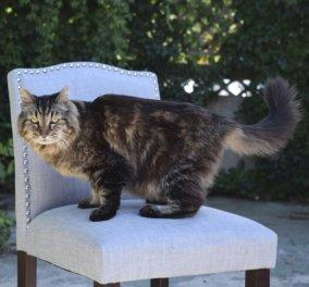 Αυτός o γάτος είναι ο γηραιότερος του κόσμου: 26 χρονών!  - Κυρίως Φωτογραφία - Gallery - Video