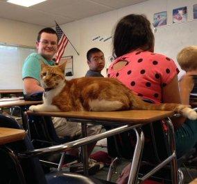 O Μπούμπα είναι ο πρώτος γάτος στο κόσμου που πάει σχολείο - Οι συμμαθητές του τον αγαπούν & τον προσέχουν στην τάξη   - Κυρίως Φωτογραφία - Gallery - Video