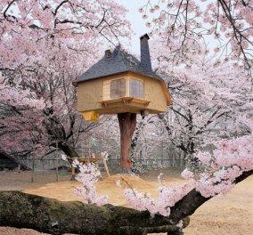 Σπίτια και κτίρια ύμνος στη φύση και στην αρχιτεκτονική! - Φώτο   - Κυρίως Φωτογραφία - Gallery - Video