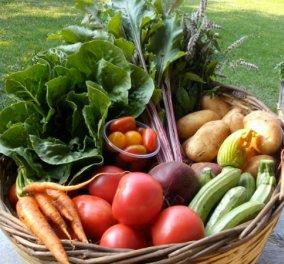 Made in Greece το Διαμάντι: Το αγρόκτημα - γη της Εδέμ με λαχανικά & φρούτα, ζαρζαβατικά βιολογικά ολόφρεσκα   - Κυρίως Φωτογραφία - Gallery - Video