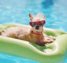 Καλημεεερααα! Βίντεο κλαίμε από τα γέλια με τα σκυλάκια που κολυμπάνε μόνα, με παρέα ή μαζί σας - Κυρίως Φωτογραφία - Gallery - Video