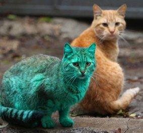 Παγκόσμια Ημέρα της Γάτας με 19 φωτό από τις διάσημες του 2015: Η πράσινη, η κακομαθημένη, η θυμωμένη  - Κυρίως Φωτογραφία - Gallery - Video