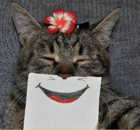 Τα πολλά πρόσωπα μιας γάτας με χιούμορ & φαντασία!   - Κυρίως Φωτογραφία - Gallery - Video