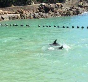 Βίντεο: Δελφίνι ραγίζει καρδιές, «εκλιπαρεί» και πέφτει στα βράχια για να σωθεί από τους κυνηγούς του   - Κυρίως Φωτογραφία - Gallery - Video