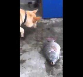 Βίντεο: Απίθανος σκύλος προσπαθεί να σώσει ψάρια- Πρέπει να το δείτε!  - Κυρίως Φωτογραφία - Gallery - Video