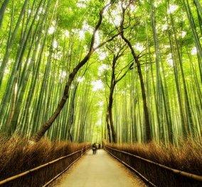 """""""Χτυπάει κόκκινο"""" ο κίνδυνος για το μέλλον των δασών και του πλανήτη  - Κυρίως Φωτογραφία - Gallery - Video"""
