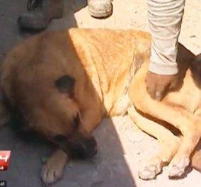 Συγκινητικό: Σκυλίτσα θήλαζε εγκαταλελειμμένο 2χρονο παιδάκι σε παραλία και το έσωσε!  - Κυρίως Φωτογραφία - Gallery - Video