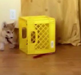 Βίντεο: Ένας σκύλος δεν θέλει πολλά για να περνάει καλά - Με ένα λουρί κι ένα καφάσι γίνεται η δουλειά - Κυρίως Φωτογραφία - Gallery - Video