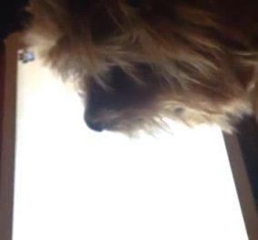 Βίντεο: Πανέξυπνο σκυλάκι παίζει παιχνίδια στο iPad - Δεν υπάρχει!  - Κυρίως Φωτογραφία - Gallery - Video