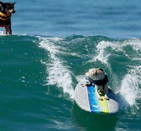 «Huntington Dog»: Αγώνες surfing στην Καλιφόρνια με πρωταγωνιστές τους μικρούς μας φίλους - Απίθανες φιγούρες καλύτερες & από επαγγελματίες - Κυρίως Φωτογραφία - Gallery - Video